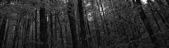 Foro gratis : Hardcore riot Forest