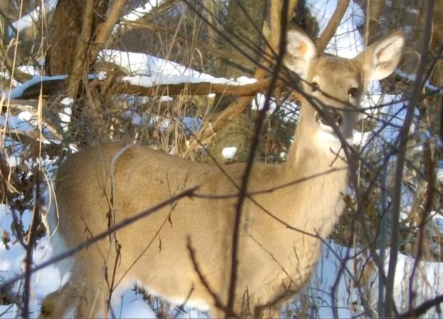 Photos from 2012-2013 Hunting season DeerImage31_5_13_zpsabb0d168