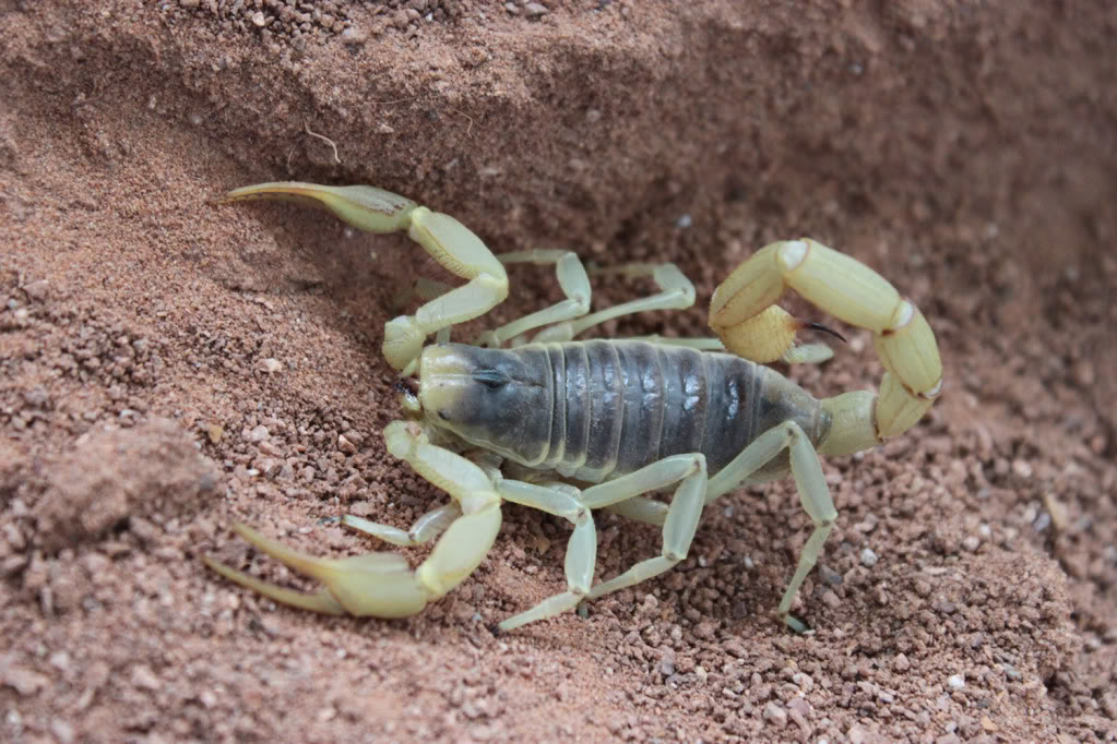 [Sharing] Your top 5 scorpions ?? IMG_1693