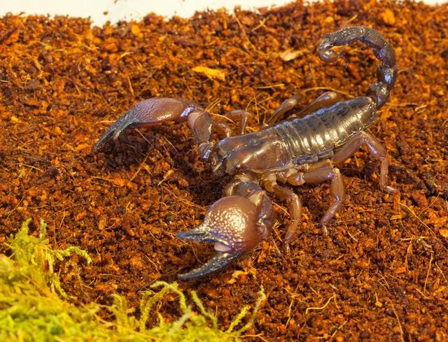 [Sharing] Your top 5 scorpions ?? Cavi