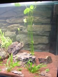 Aquarium 160L brut (110L nets) Aqua29012011004