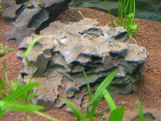 Ohko stone DSCF3389