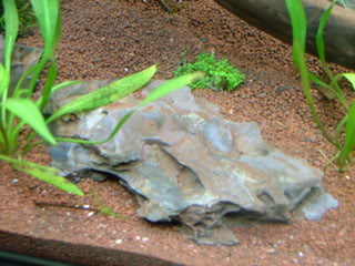Ohko stone DSCF3391