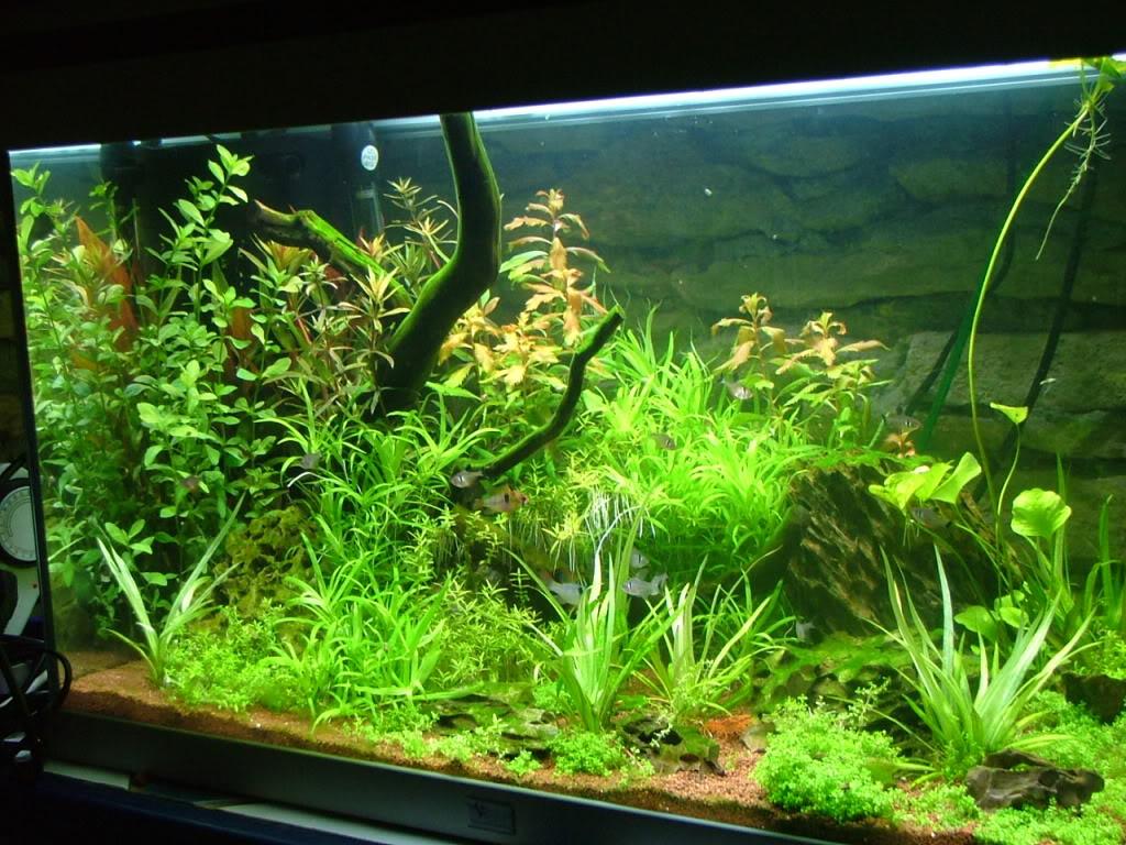 Aquarium 160L brut (110L nets) DSCF3509