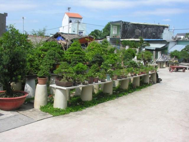 Offline with Mr. Robert Stenven in my Garden (lnvinh - VietNam) DSCN8843