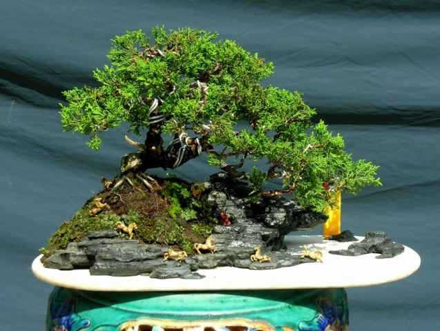 Juniper mini landscaping Dtung_xuandoibachma640x480