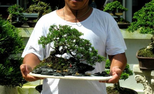 Juniper mini landscaping Dtung_xuandoibachmab640x480