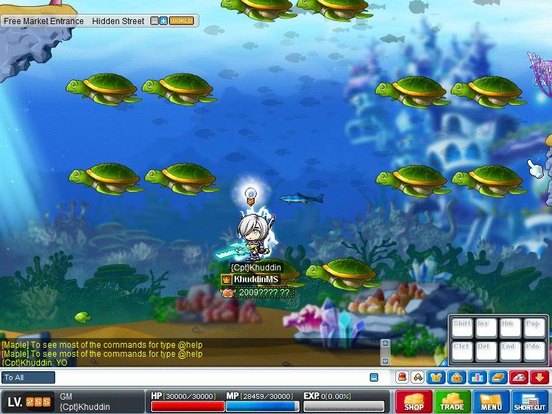 Aqua Free Market  Maple1