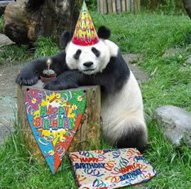 Happy birthday pommy!!  21367-Panda-Celebrates-1st-Birthday