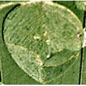 Crops Circles 2011 MilkHill-comments-teardrop