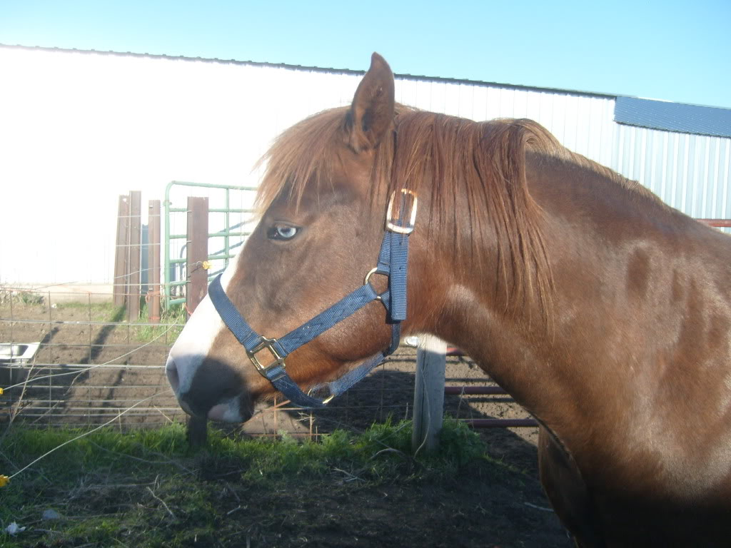 My Horses S7300854