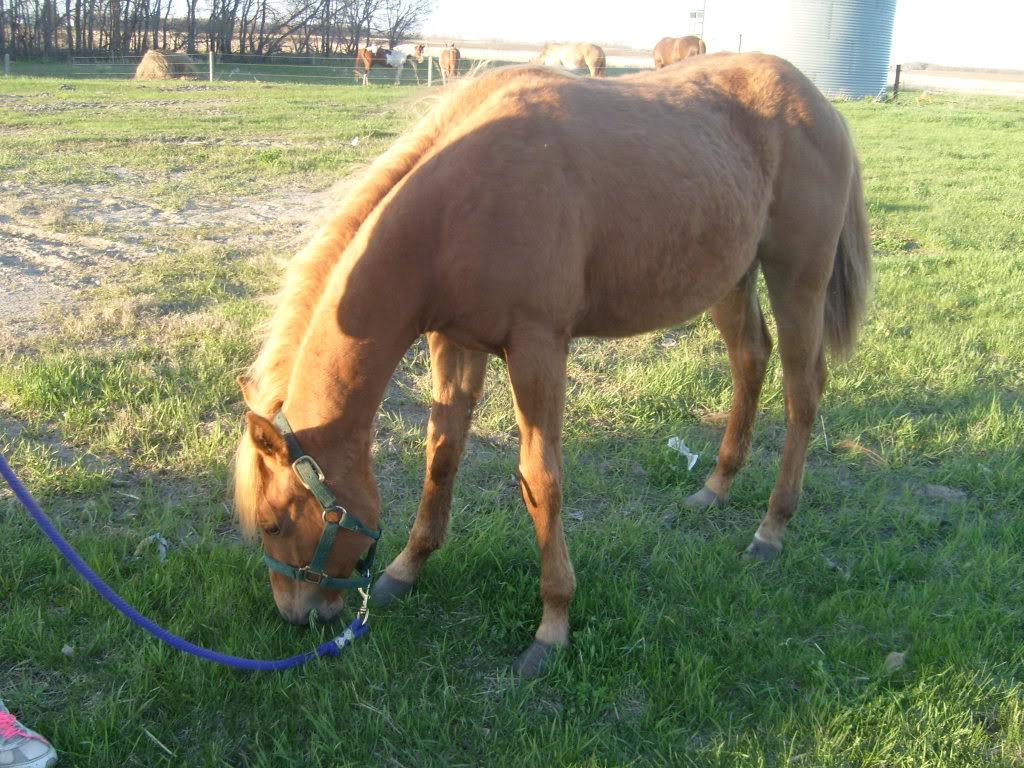 My Horses S7300855
