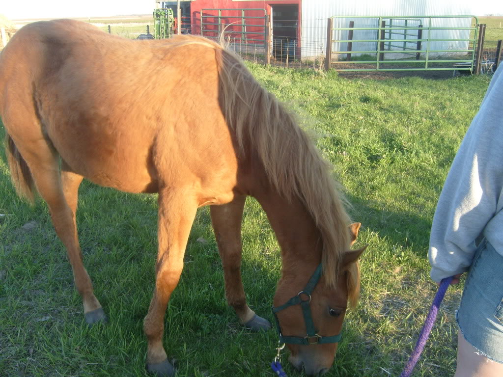 My Horses S7300856
