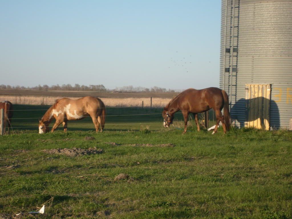 My Horses S7300857