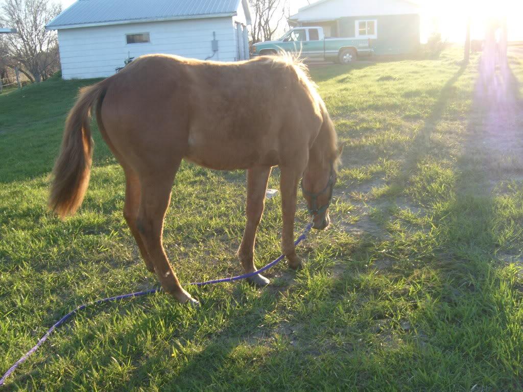 My Horses S7300859