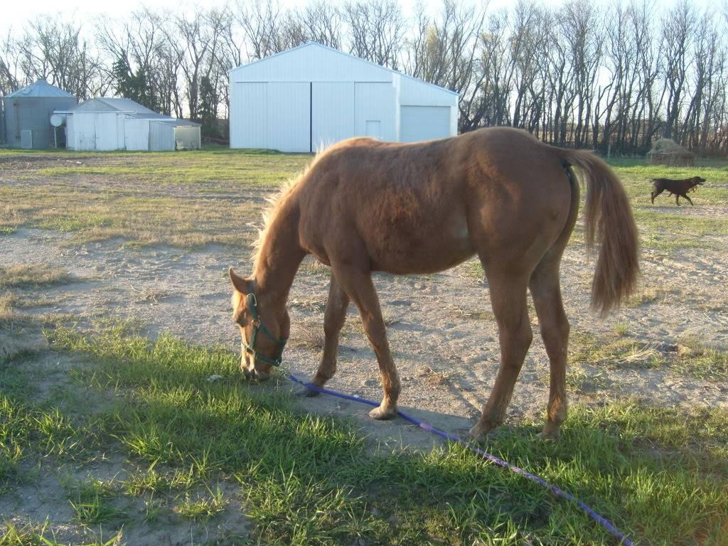 My Horses S7300861