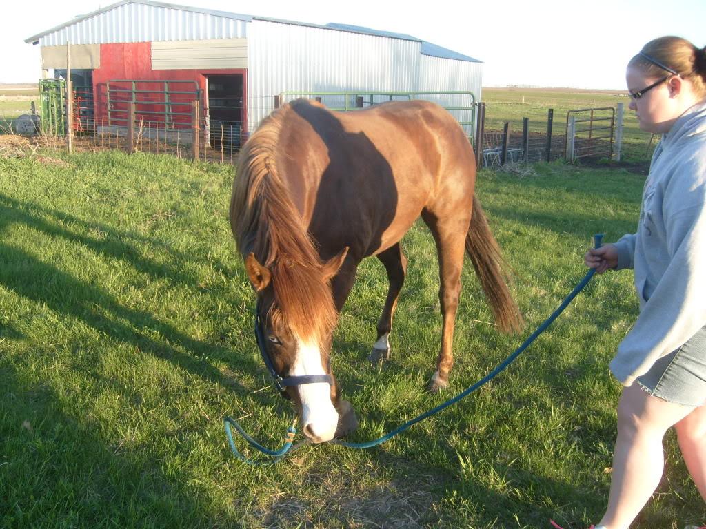 My Horses S7300866