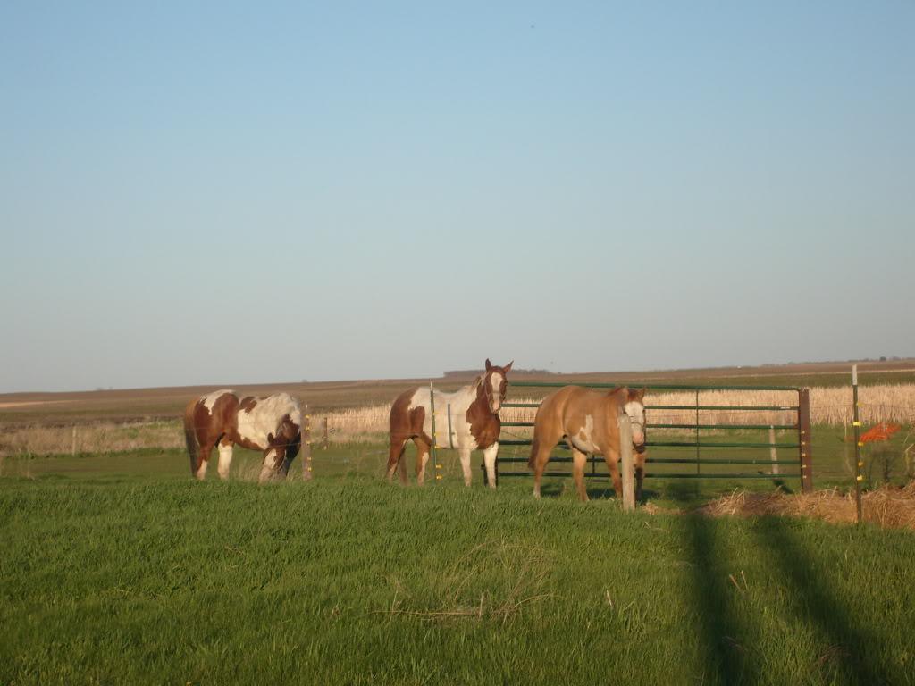 My Horses S7300869