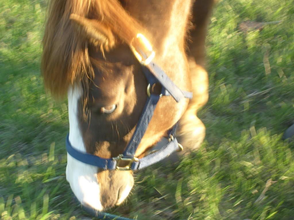 My Horses S7300870