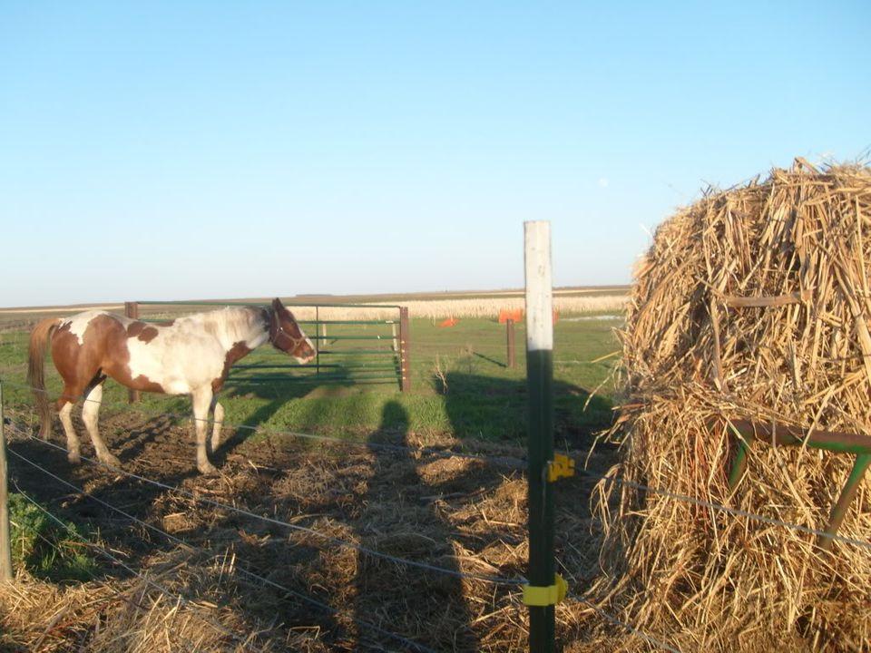 My Horses S7300874