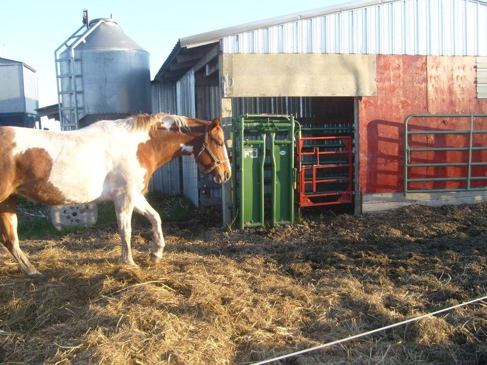 My Horses S7300875