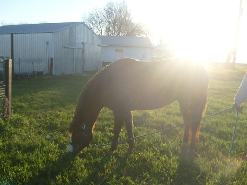 My Horses S7300877