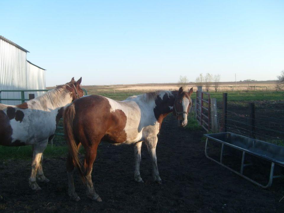 My Horses S7300878