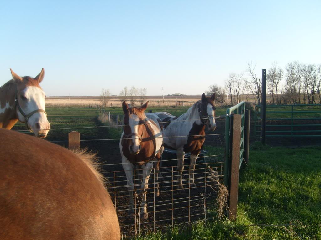 My Horses S7300881