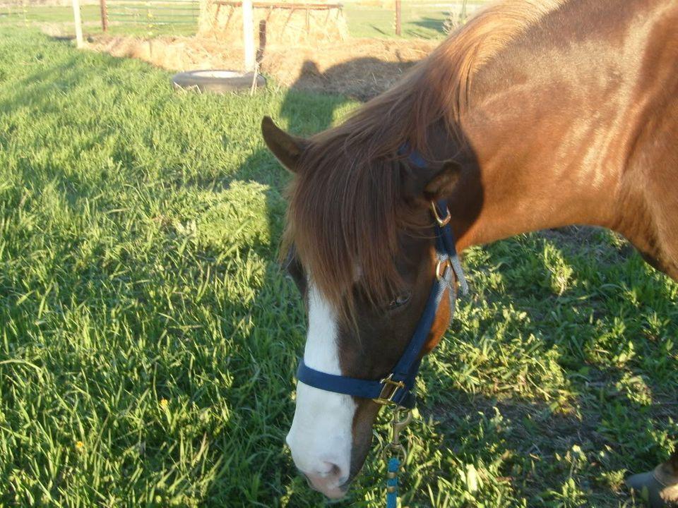 My Horses S7300884
