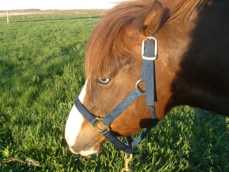 My Horses S7300885