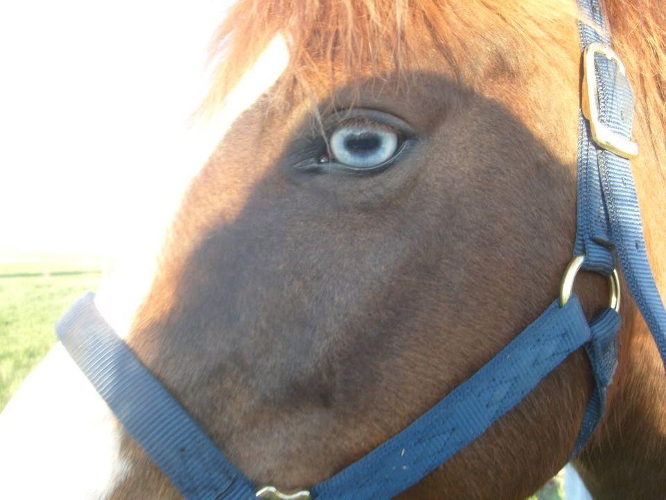 My Horses S7300886
