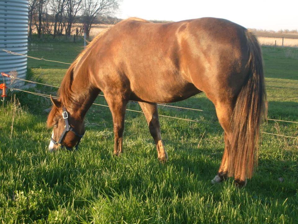 My Horses S7300913