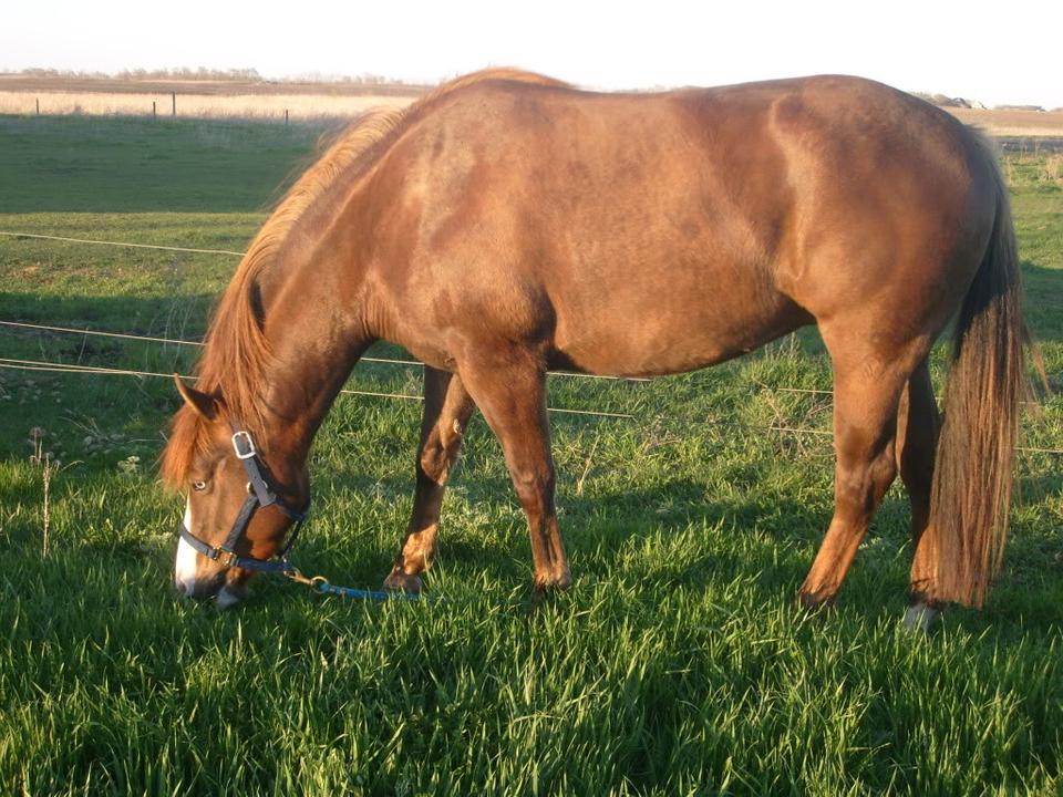 My Horses S7300914