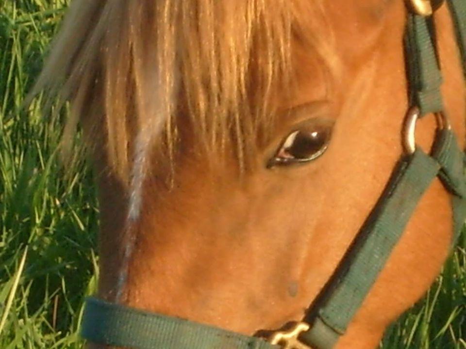 My Horses S7300927