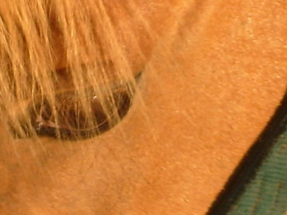 My Horses S7300935