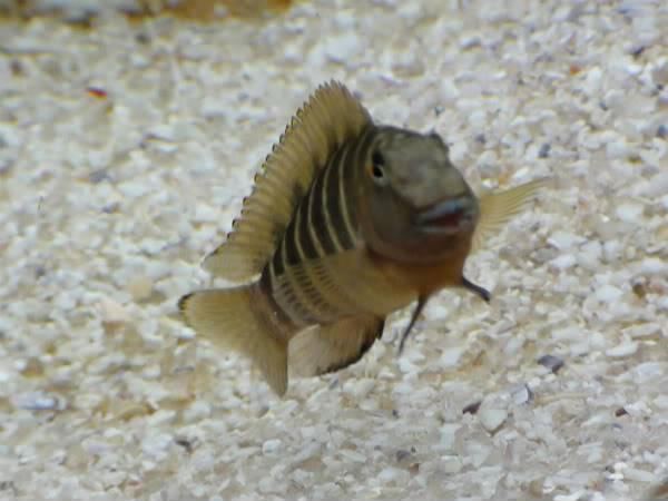 Colaborem: Fotos de Peixes e Plantas Aquáticas Comunidadedotanga039-1