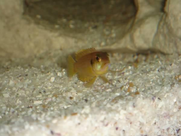 Colaborem: Fotos de Peixes e Plantas Aquáticas Halloweencicldeos009-1