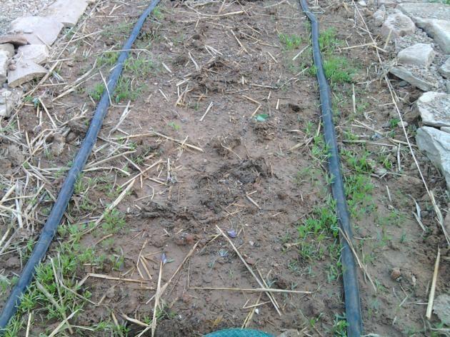 Proyecto huerto urbano - Página 2 2012-03-17175225_630x472
