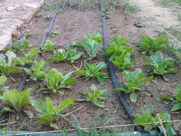 Proyecto huerto urbano - Página 2 2012-03-17175248_630x472