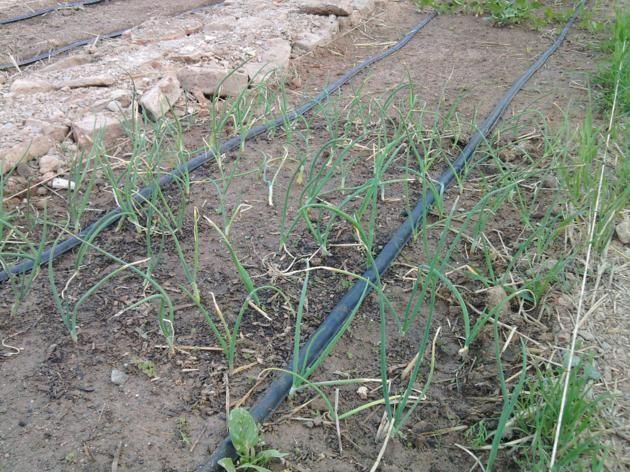Proyecto huerto urbano - Página 2 2012-03-17175305_630x472