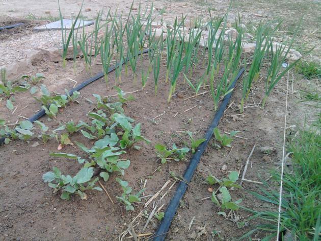 Proyecto huerto urbano - Página 2 2012-03-17175317_630x472