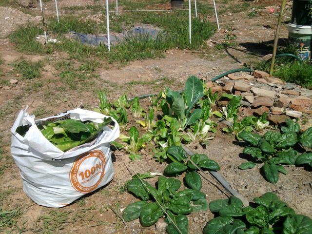 Proyecto huerto urbano - Página 3 2012-04-08125602_640x480