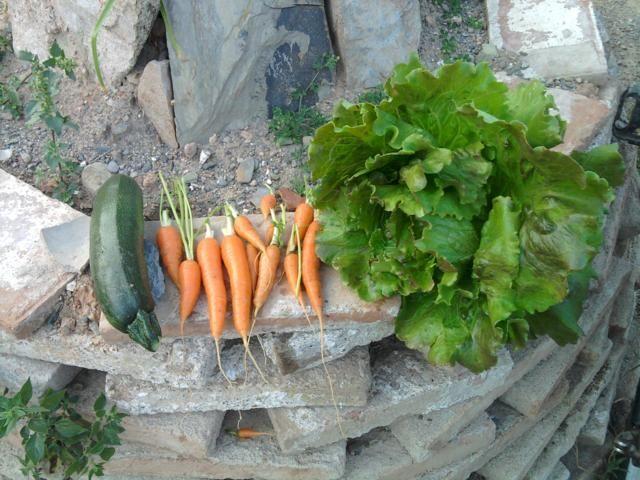 Proyecto huerto urbano - Página 3 2012-05-30202833_640x480