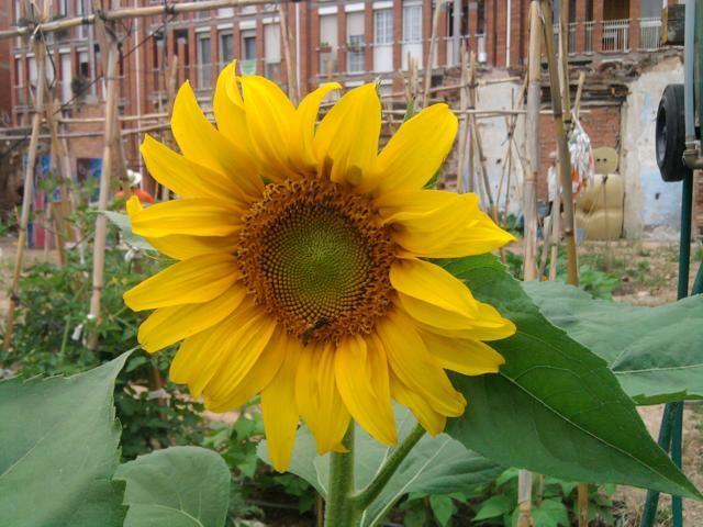 Proyecto huerto urbano - Página 3 2012-06-06094442_640x480