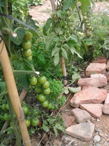 Proyecto huerto urbano - Página 3 2012-06-11120736_360x480