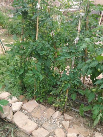 Proyecto huerto urbano - Página 3 2012-06-11120800_360x480