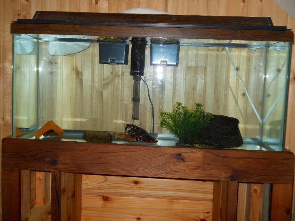 stand i'm makeing for 55 gallon and a ten DSCN1174
