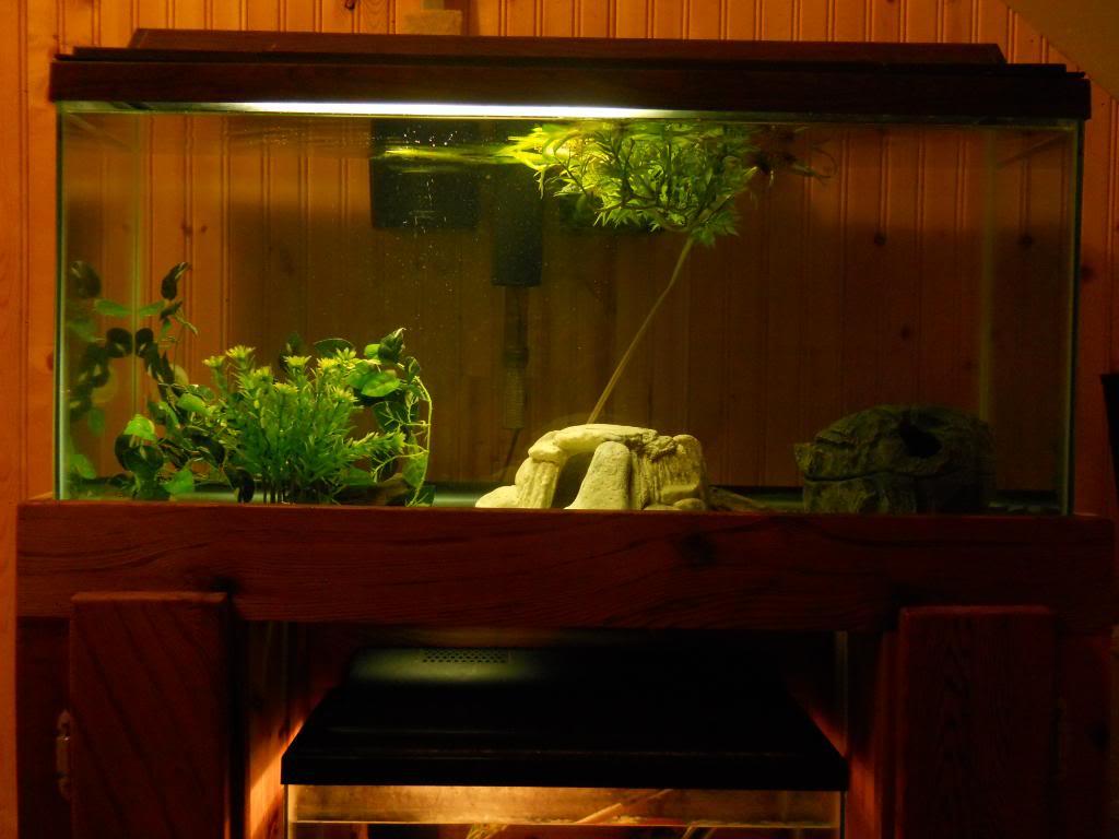 Mulit fish tank stand DSCN1425