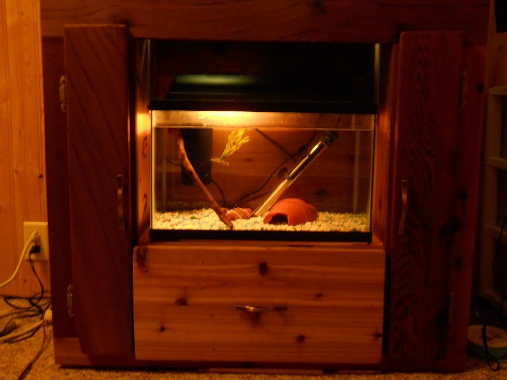 Mulit fish tank stand DSCN1426