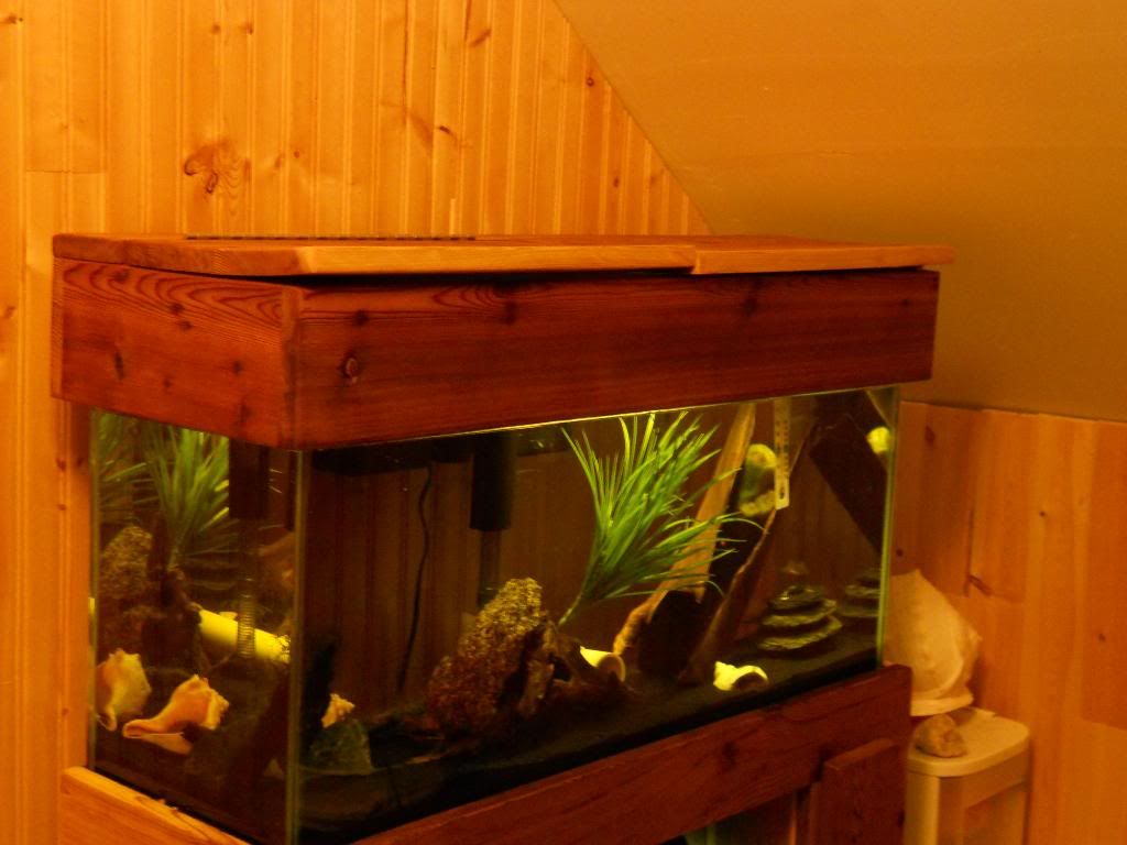stand i'm makeing for 55 gallon and a ten DSCN1783